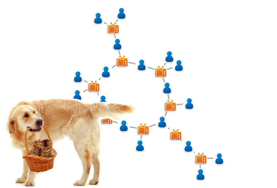 Networks and puppies